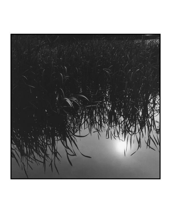 Sunshine on the Pond