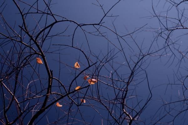 Final Leaves