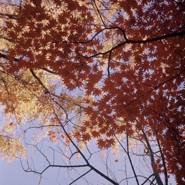 Autumn Stars
