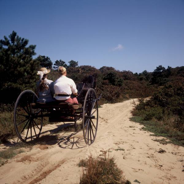 Buggy Ride through the Moors