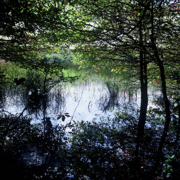 Almanac Pond