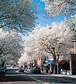 062_Witherspoon_Street_Cherry_Strees_I.jpg